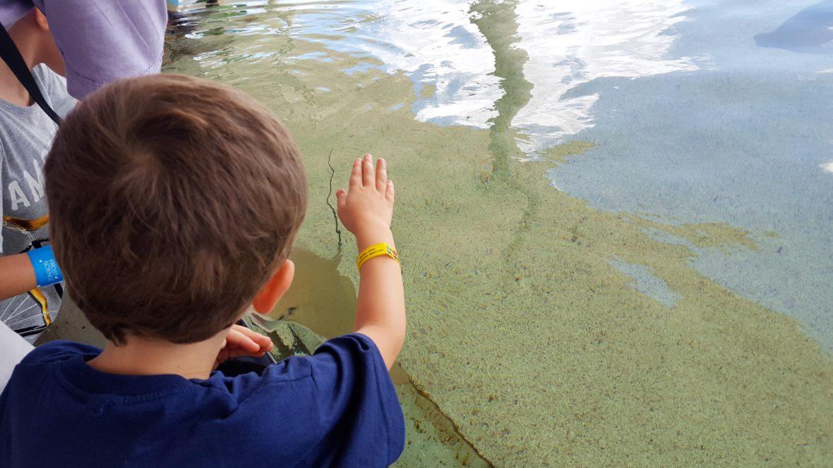 Vacaciones con niños en Miami y Orlando - Mammaproof Barcelona