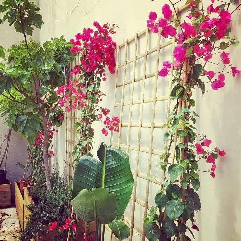 Moderato-jardín-ok