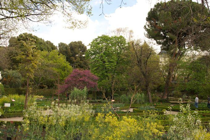 Jardin botanico Madrid6