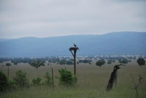 parque-nacional-cabaneros
