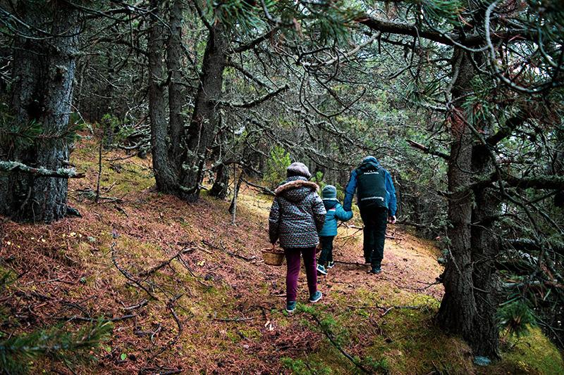 26.-paseo-bosque-setas
