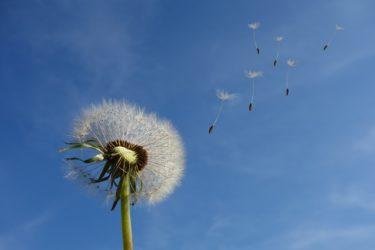 primavera-sin-alergia