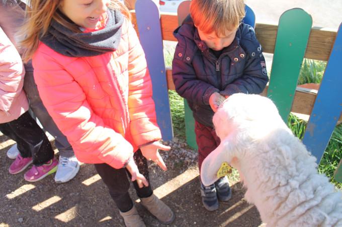 granja ovejas