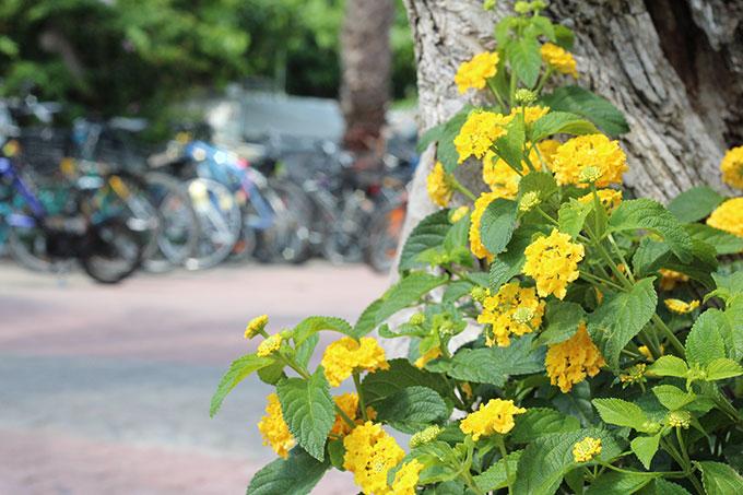flores y bicis