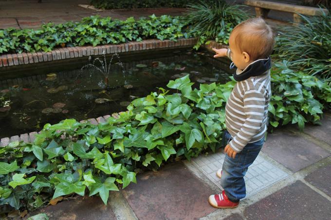 estanque peces jardines de la UB