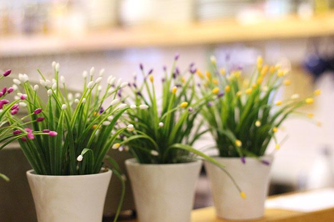 ideal_plantas