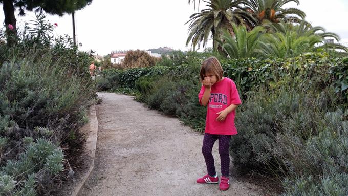 plantas aromaticas cosmocaixa