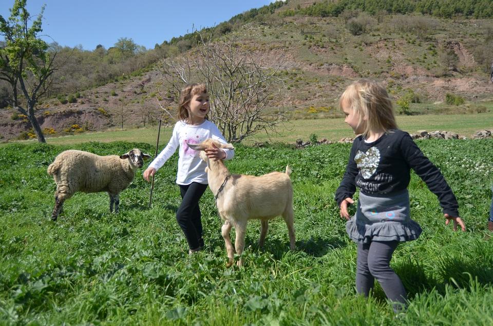 Torre de casanova cabra i ovella