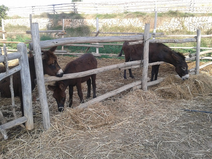 7_burros