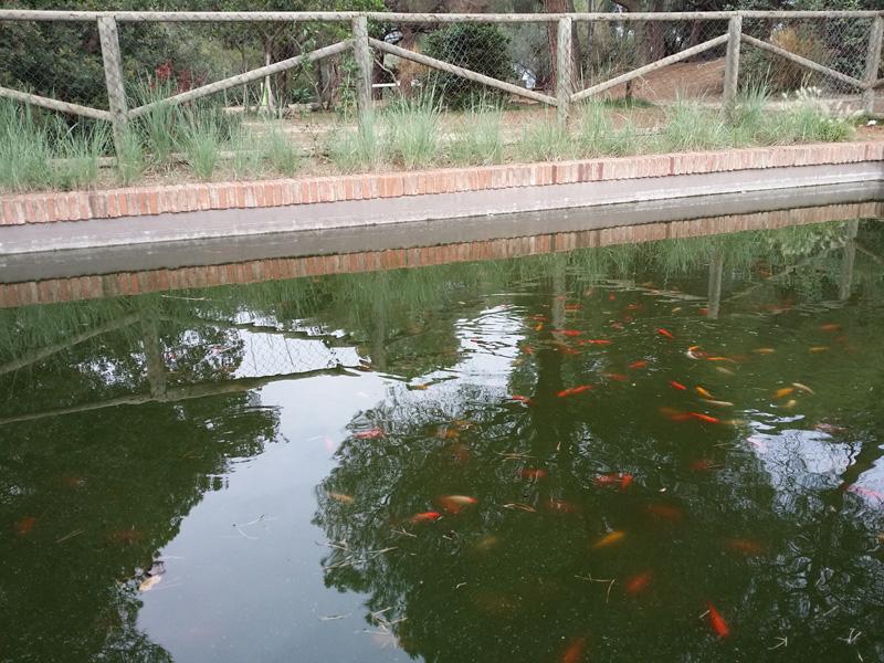estanque parque oreneta