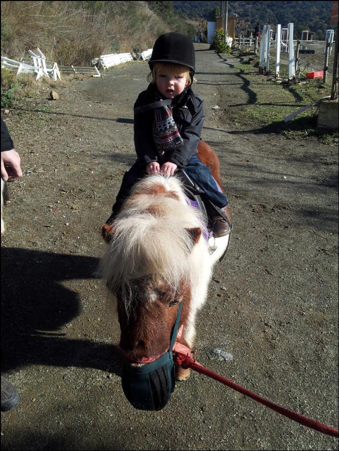 poni club catalunya ponis