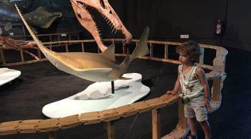 museu blau expo dinos