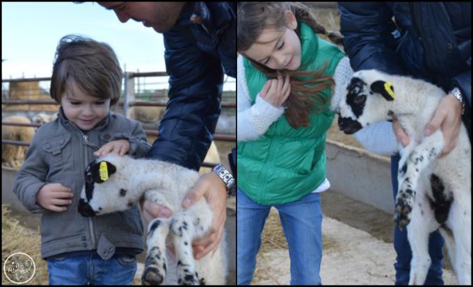 granja-ovelles-mas-marce-emporda-4