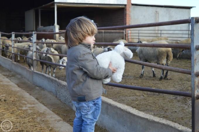granja-ovelles-mas-marce-emporda-6