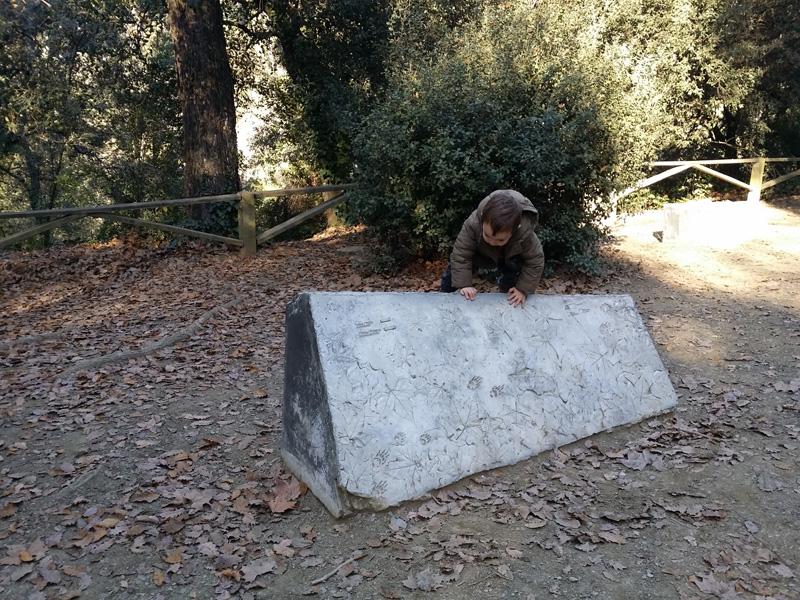 huellas en piedras