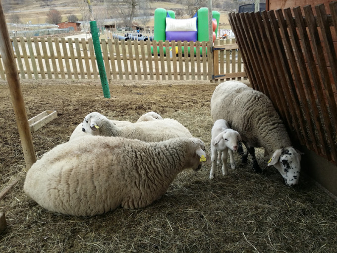 mmmp ovejas cerdanya resort