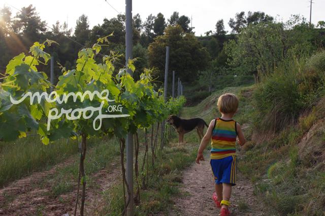 Disfrutando de un alojamiento en la naturaleza en Vinos Colltor