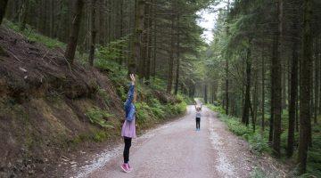 cardinham-woods