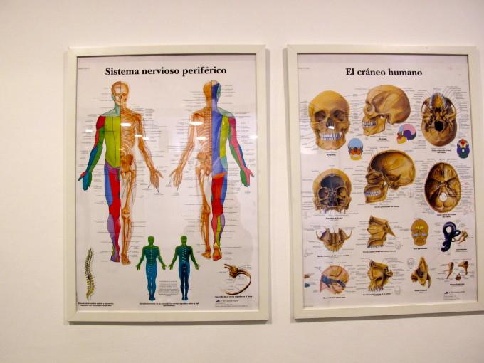 osteopetits-5